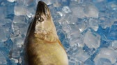 ling : Fish pike in the ice on the turntable. The table is spinning. Background blue under the ice. The camera is static. The fish is fresh. Stock Footage