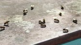 organizar : bees crawling on the roof of the hive, basking in the sun after hibernation Stock Footage