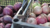 crate : Edible, red and white onions is in a plastic crates, the onion harvest, close-up