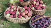 груши : Baskets of red apples, green pears, plums, red and black Rowan stand on the green grass