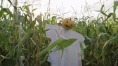 abóbora : The celebration of Halloween. A Scarecrow with a Jack lantern instead of a head standing in a field of corn. In the mouth of a pumpkin sticking out of a green leaf. Steadicam shot