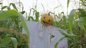 sgomento : The celebration of Halloween. Garden Scarecrow with Jacks lantern instead of the head and the bloody inscription Halloween is on the corn field. Steadicam shot