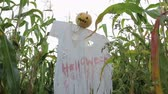 awful : The celebration of Halloween. Garden Scarecrow with Jacks lantern instead of the head and the bloody inscription Halloween is on the corn field. Steadicam shot