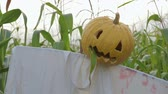 korku : The celebration of Halloween. Garden Scarecrow with Jacks lantern instead of the head and the bloody inscription Halloween is on the corn field. Steadicam shot