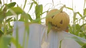 awful : The celebration of Halloween. A Scarecrow with a Jack lantern instead of a head standing in a field of corn. In the mouth of a pumpkin sticking out of a green leaf. Timelapse shot