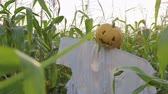 tomada : The celebration of Halloween. A Scarecrow with a Jack lantern instead of a head standing in a field of corn. In the mouth of a pumpkin sticking out of a green leaf. Steadicam shot