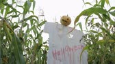 vyděsit : The celebration of Halloween. Garden Scarecrow with Jacks lantern instead of the head and the bloody inscription Halloween is on the corn field. Steadicam shot