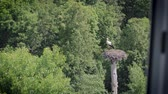 View from the hotel window on the white stork standing in the nest. The bird is waiting for its soul mate