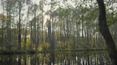 dusk forest : Beautiful autumn landscape on the river, the reflection of trees in the water. Autumn concept Stock Footage