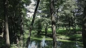 освещенный солнцем : Panorama of the landscape of a picturesque forest stream in a green forest. Outdoors Sunny summer weather. Steadicam shot