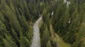 vadi : Aerial view of the turbulent river flowing among the spruce forest in the highlands. The concept of rafting