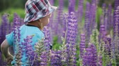 oynak : Boy walking with his mother in the meadow. A small, comical child in a hat runs away from his mother. A woman in a summer blue dress catches her son in purple flowers. Happy childhood, the concept of motherhood Stok Video
