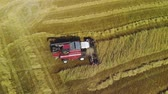 vyrobit : Aerial view of the red harvester removing rows of plants grain crops in Sunny summer weather Dostupné videozáznamy