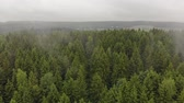 tasavvufi : Aerial view of autumn mists emanating from the green coniferous trees of fir trees in the forest. Magnificent scenery and beauty of wildlife Stok Video