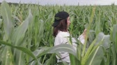 informatico : Agricultural engineer, a young girl in a white shirt and cap goes through a corn field with a tablet in his hands and enters the data before harvesting. The concept of agribusiness