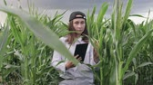 conservacion : Agricultural engineer, a young girl in a white shirt and cap goes through a corn field with a tablet in his hands and enters the data before harvesting. The concept of agribusiness