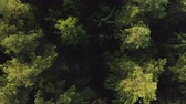 tasavvufi : Cinematic shot top view of a mysterious mystical coniferous forest from a horror movie. The concept of anxious waiting, unexpected finding Stok Video