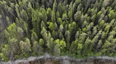 acalmar : Aerial view of the many peaks fir trees near the pond. Drone moves from the forest to the rocky shore. The trunks of dry fallen trees lie in the downward direction. The concept of negligent forestry