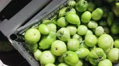 корзина : Lots of unripe green tomatoes are stacked in a black plastic box on the market. Harvesting for seasonal pickling and canning vegetables. The concept of agribusiness