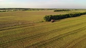 vyrobit : Aerial view. Flying combine harvester removing oats in a field with bushes, autumn evening at sunset. The concept of agribusiness
