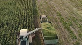 derramar : Aerial view cutting corn silage with a self-propelled machine and filling a tractor trailer with crushed material in Sunny evening weather in autumn. Beautiful rural scene, the concept of agribusiness