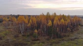 sprookjesbos : On a picturesque field there is a beautiful, fabulous birch grove under a blue sky through which the suns rays, autumn time, and the colors of nature break through. Aerial view