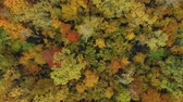tasavvufi : Aerial: magical forest from a bird s eye view. Drone flies over colorful autumn trees. Beautiful seasonal foliage. Wonderful riot of bright colors of green, yellow and orange