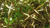 Tropical butterflies Stock Footage