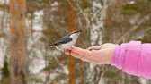 semena : Bird in womens hand eat seeds