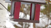 холодный : Bird feeder in the park Стоковые видеозаписи