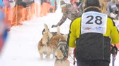 sanki : Team of husky sled dogs with dog-driver