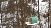 feeder : Bird feeder in the park Stock Footage