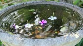 repousante : Flowers dropping into the still water of a bird bath with reflections in the water.