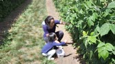 Asian chinese child and mother picking strawberry on a farm