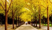 piekne : Walking along the parkway in Autumn, Beijing, China Wideo