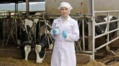 rigorous : serious young woman veterinarian standing with test bottle next to cows on farm