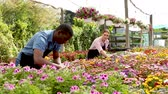 kwiaciarnia : Two experienced workers gardening in glasshouse, checking flowers