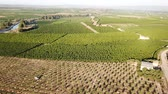 привлекательность : Aerial view of ripe peach trees garden