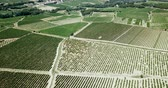 vinice : Aerial view of the vineyard grape vines at sunny day