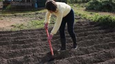 hoe : Positive woman hoeing off weeds in domestic garden