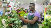 vitrin : Focused African American man working in flower shop, checking potted plants