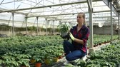горшках : Portrait of young woman working in hothouse checking young potted tomato plants