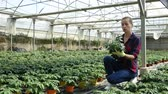 горшках : Portrait of young woman working in hothouse, checking young potted tomato plants Стоковые видеозаписи