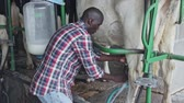 ordeño : Farmer young man working with automatical cow milking machines