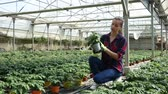 bahçıvan : Portrait of young woman working in hothouse, checking young potted tomato plants Stok Video