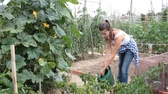 zelenina : Positive woman gardening in plantation – watering with watering can plants