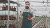 plant fertilizer : Male owner of plantation supervising growth of tomato seedlings in greenhouse Stock Footage