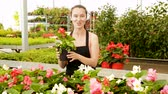 горшках : Friendly smiling female florist holding a pot with a begonia plants in the hothouse Стоковые видеозаписи