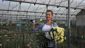 virágárus : Portrait of young woman working with  carnation flowers  in greenhouse Stock mozgókép