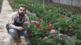 plant fertilizer : Portrait of worker who taking care of cranesbill flowers in glasshouse farm Stock Footage